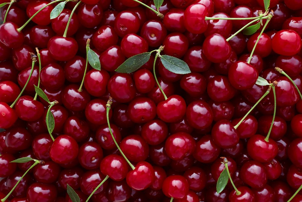 Close,Up,Of,Pile,Of,Ripe,Cherries,With,Stalks,And